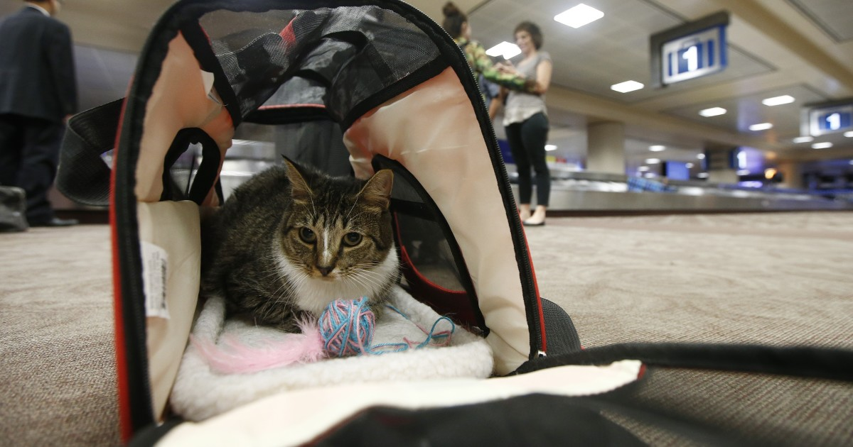 U.S. seeks to limit service animals on planes to trained dogs